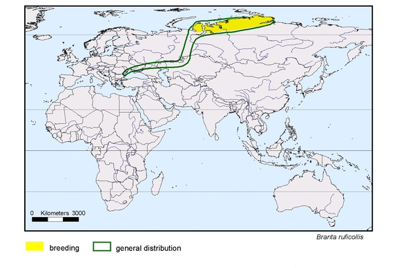map about the distribution of Branta ruficollis