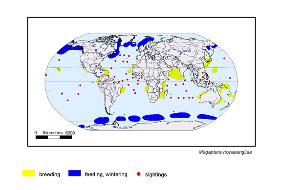 distributionmap of Megaptera novaeangliae